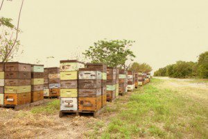 hives in orange blossom country